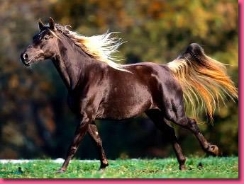 jeu chevaux gratuit