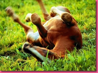 photo jeu de chevaux gratuit